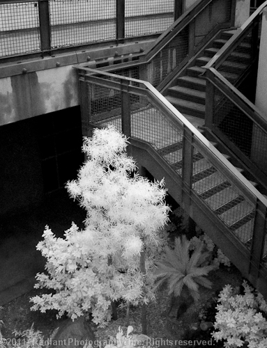 Springs Preserve IR Tree